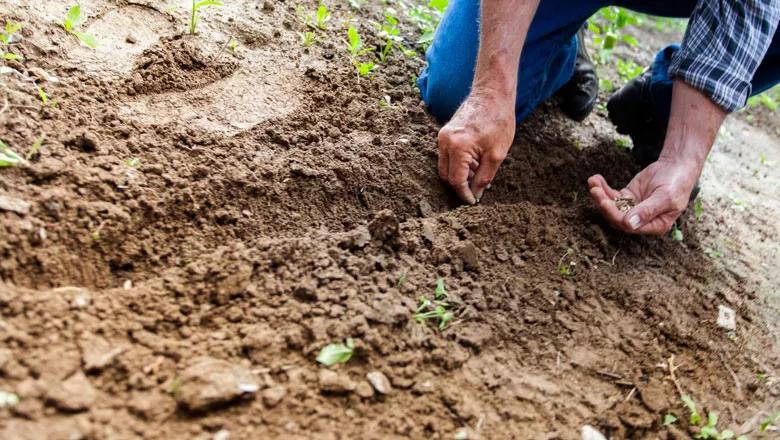 homem plantando semente