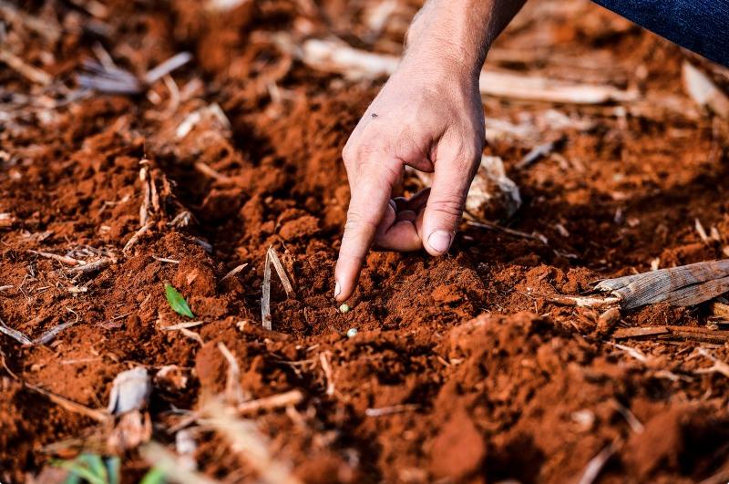 mao sinalizando semente na terra