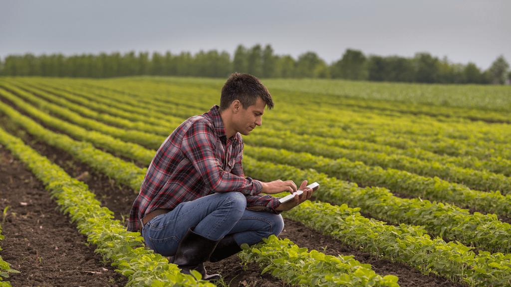 homem com tablet analisando campo