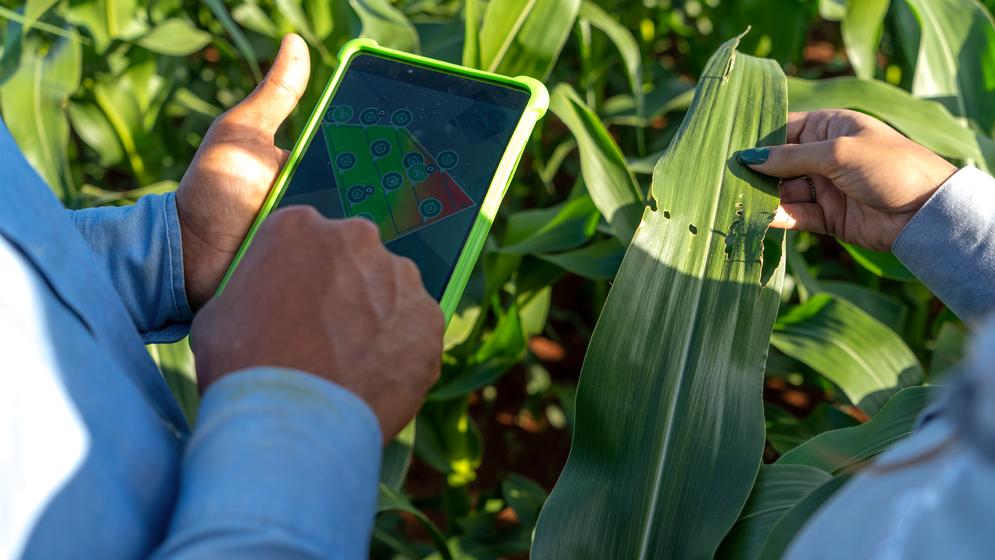 Ferramentas digitais como Cropwise protector ajudam no manejo integrado de pragas