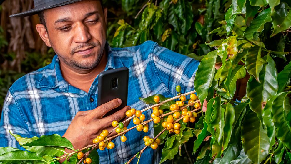Com monitoramento digital, produtores têm conseguido um combate mais eficaz.