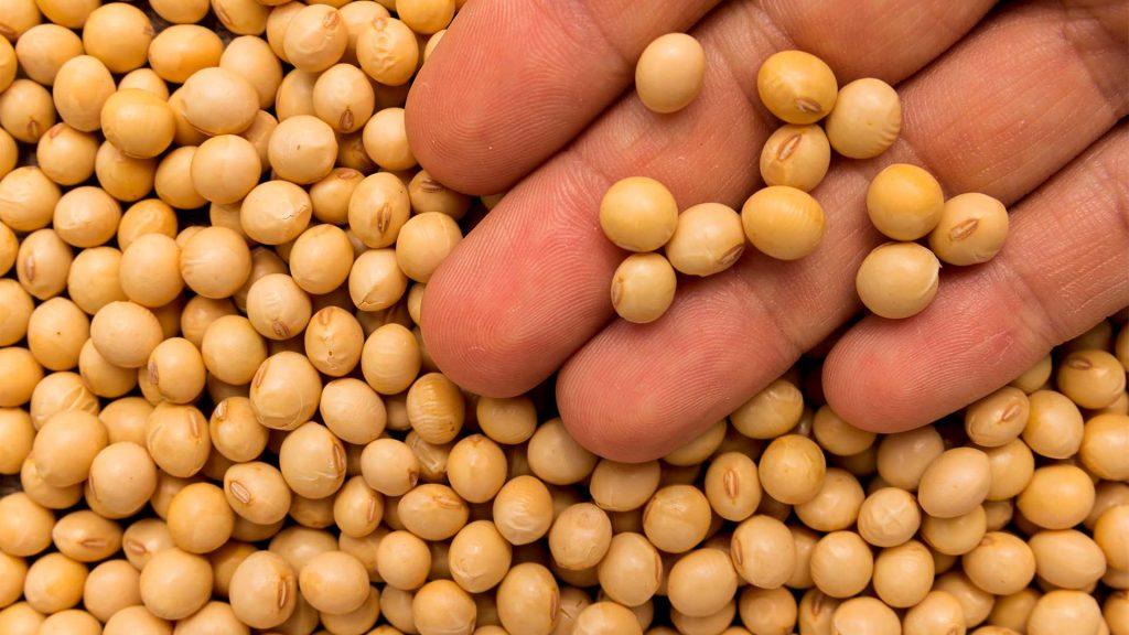sementes certificadas de soja