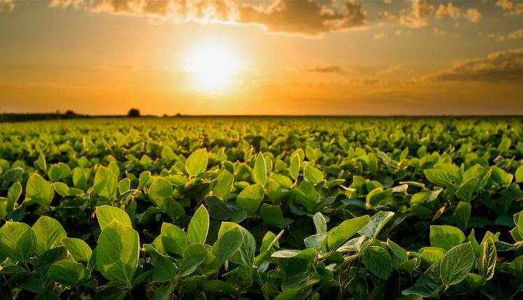 La Niña e a agricultura. O que vem pela frente para a safra 21/22?